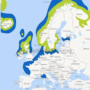 Eider Duckl distribution